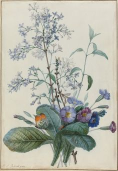 Redouté, Pierre Joseph French, 1759 - 1840 A Bouquet of Flowers with Insects