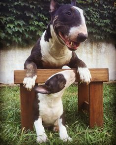 Bully and Baby