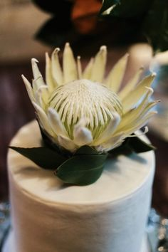 simple wedding cake with king protea topper Protea Wedding, Wedding Flowers, Wedding Cake Toppers, Wedding Cakes, King Protea, Celebration Cakes, Wedding Inspiration, Wedding Ideas, Amazing Cakes