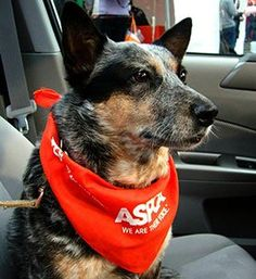 Subaru's Share the Love Event Raises $1.4 Million for the ASPCA