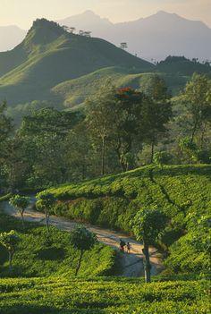 Tea plantation, Sri Lanka by David Noton Photography Places Around The World, Travel Around The World, Around The Worlds, Beautiful Places To Visit, Wonderful Places, Beautiful Islands, Beautiful World, Voyage Sri Lanka, Viajes