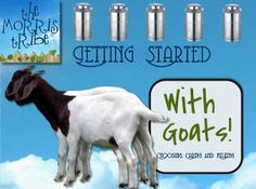 """How to Get Started with Dairy Goats"" Video — The Morris Tribe"