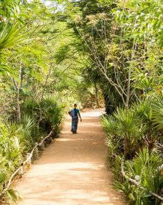 Meditative path in Auroville Union Territory, Bay Of Bengal, Living In England, Pondicherry, French Colonial, Miss India, Tree Line, French Quarter, Train Rides