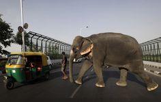 New Delhi, India photo by Manish Swarup