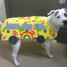 This may be Rah Rah's next year Halloween outfit. Love it! Magic School Bus Pittie