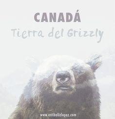 Tutorial Photoshop: Cómo crear un cartel con doble exposición Tutorial Photoshop, Brown Bear, Polar Bear, The 100, Html, Movie Posters, Animals, Be Creative, Exhibitions