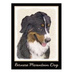 Bernese Mountain Dog Postcard - dog puppy dogs doggy pup hound love pet best friend