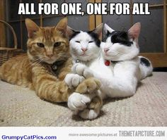 funny kittys | Cute Kitty Cats Look Like The Three Musketeers ...what great cats to sit like this.....