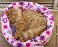 Kitten Care - How to Care for Kitten Feeding, Sleeping, Training, Worming, Illness + More