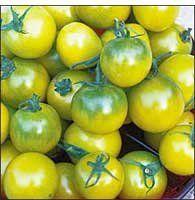 Seed Savers Exchange 1231 Open-pollinated Tomato Seeds