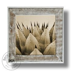 """20"""" x 20"""" sephia agave plant artwork on canvas print within a white washed weathered reclaimed cypress wood 27"""" x 27"""" frame. Not made from dingy pallet wood. Made in the USA. Visit www.BeachFrames.com"""