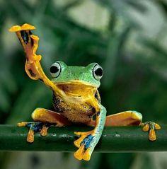 """Frog:  """"Hey Girl!  I'm Over Here!"""""""