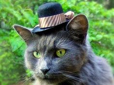 Cat with a Funny Hat this looks like my cat!!!!!! Except he wouldn't wear a hat like that!