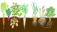 Well, then you'll enjoy these 50 free DIY raised garden bed plans to build your own raised garden bed cheaply and grow vegetables. Raised Garden Bed Plans, Building Raised Garden Beds, Roots Drawing, Irish Festival, Garden Mural, Illustration, Garden Boxes, Growing Vegetables, Root Vegetables