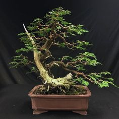 after #bonsai