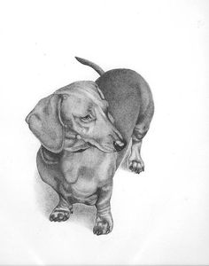 Dachshund Paintings   Dachshund Drawing - Ferris Cook   Doxie Love