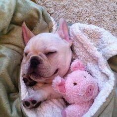 Piggies in a blanket!