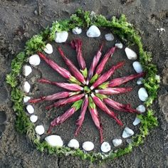 Post image for Nature Mandala #12. Hibiscus, stones and seaweed today. :-) http://louisegale.com