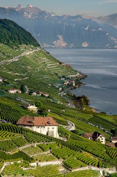 Love terraced gardening and vineyards - here at Lavaux, Switzerland - on Lake Geneva.