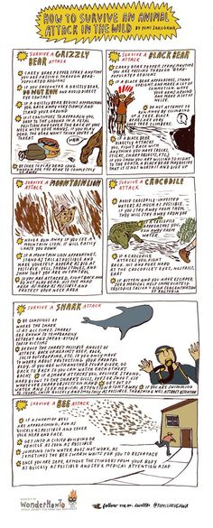 wild animals and survival techniques How to defend yourself from wild animals how to defend yourself from wild animals pinterest people also love these ideas survival tips when encountering animals.