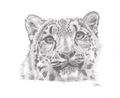SNOW LEOPARD Limited Edition art drawing print by ArcadiaPortraits