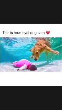 Baby Animals Super Cute, Cute Wild Animals, Cute Baby Dogs, Cute Funny Dogs, Cute Dogs And Puppies, Cute Little Animals, Cute Funny Animals, Animals Beautiful, Doggies