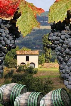 agritourisme toscane, italie, sejour toscane