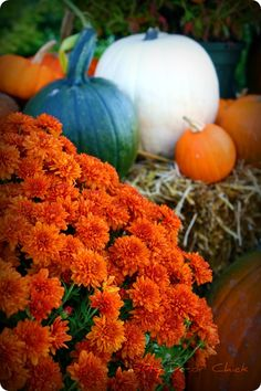 Ideas for fall decorating outside and on the front porch