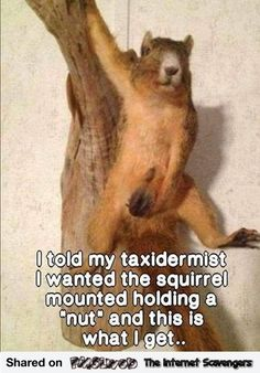 Hilarious pictures post Massive giggles ahead - Prank - Prank meme - - Funny taxidermist squirrel prank The post Hilarious pictures post Massive giggles ahead appeared first on Gag Dad. Funny Adult Memes, Funny Jokes For Adults, Funny Animal Memes, Stupid Funny Memes, Funny Cartoons, Haha Funny, Funny Animals, Lol, Funny Stuff