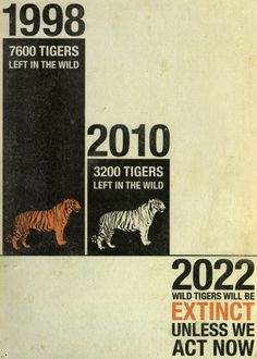 Tigers will go extinct in the wild, doubtful they'll last much longer in captivity due to the massive inbreeding due to so few remaining...