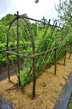 New garden landscaping design trellis ideas Potager Garden, Veg Garden, Vegetable Garden Design, Edible Garden, Garden Landscaping, Fruit Garden, Garden Shrubs, Landscaping Design, Vegetable Gardening