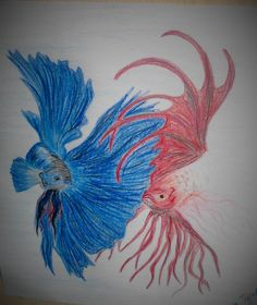 My fish Neptun and his friend :)