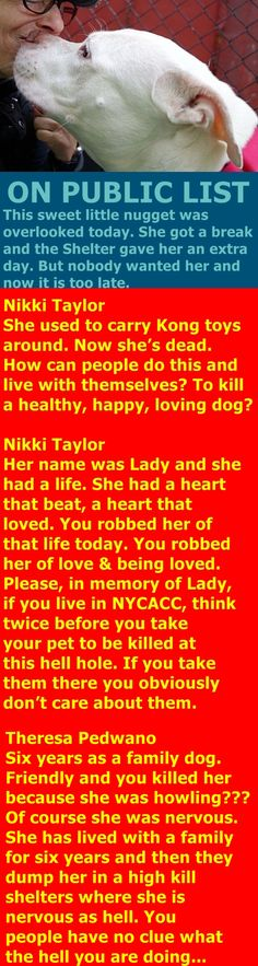 MURDERED 10/18/2017 --- Hello, my name is Lady. My animal id is 9354. I am a desexed female white dog at the Manhattan Animal Care Center. The shelter thinks I am about 6 years 1 weeks old. I came into the shelter as a owner surrender on 10-Oct-2017, with the surrender reason stated as person circumstance- moving – no pets allowed. http://nycdogs.urgentpodr.org/lady-9354/