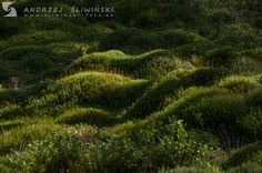 Mosses in the morning light.  #naturephotography