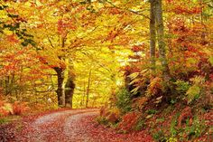 Reserva de la Biosfera de Redes (Asturias) 10 paisajes para disfrutar del otoño sin salir de España (FOTOS)