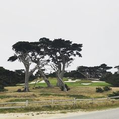 It may be time to finally pick-up golf if I can hang out here ⛳️ #pebblebeach #carmelbythesea #monterey #17miledrive #lastday #backtoreality #carmellocals #montereybaylocals - posted by Libby Levinson https://www.instagram.com/libbysellsdenver - See more of Carmel By The Sea, CA at http://carmellocals.com