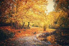 ksorra:    Golden Autumn byEdina Janega