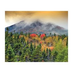JP London MD4049 Autumn Mist Forest Mountain Removable Full Wall Wallpaper Mural