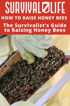Raising honey bees is a great way to produce your own food and make a little money. It's also just a fun hobby! Learn more about beekeeping in this article. #SurvivalLife #Survival #HowToMake #HowToBuild