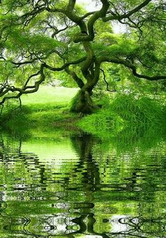 beautiful tree with flowing water Beautiful World, Beautiful Places, Beautiful Pictures, Beautiful Dream, Beautiful Flowers, Landscape Photography, Nature Photography, Image Nature, Tree Forest