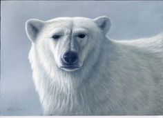 ice bear by Jeremy Paul