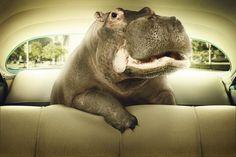 [フリー画像] 動物, 哺乳類, カバ科, グラフィックス, フォトアート, カバ, 201006111500 - GATAG|フリー画像・写真素材集 2.0