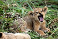 Gallery | Destinations Africa | African Travel Experts