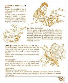 La Familia de la Apicultura - The Beekeeping of Family: Manual Apícola Ilustrado - Beekeeping Illustrated Manual. Drone Bee, Bee Hive Plans, Bee Boxes, Backyard Beekeeping, Learn Faster, Queen Bees, Bee Keeping, Harvest, Manual