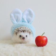 A bunny hedgehog~ Baby Animals Super Cute, Cute Little Animals, Cute Funny Animals, Cute Cats, Baby Animals Pictures, Cute Animal Pictures, Animals And Pets, Baby Hedgehog, Cute Creatures