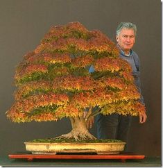 Walter Pall's winning Maple Bonsai that won the Bonsai Today / Art of Bonsai Photo Contest. So precious♥
