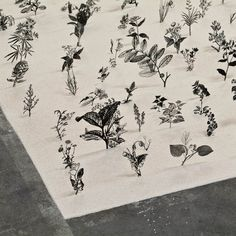 blackfield. an installation using stainless steel and sand to depict victorian botanical drawings. by zadok ben david