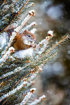 Hungriges Eichhörnchen