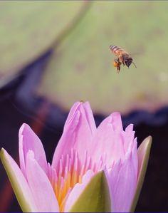 Bee crusin' around t