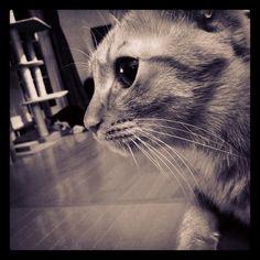 yoshiken2cats